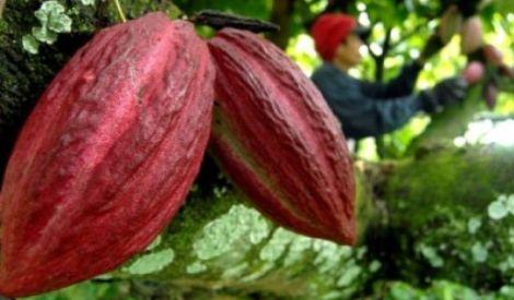 Standarisasi Kebijakan Kunci Perbaikan Ekspor Hasil Hutan