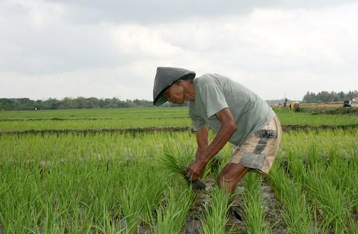 Tingkatkan Produksi Pangan, Petani Pemakai Air Perlu Diperhatikan