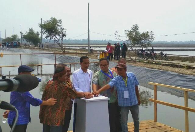 Bareng Jokowi, Mandiri Revitalisasi Lahan Tambak Muara Gembong
